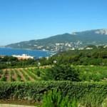 Рынок винодельческой земли и недвижимости