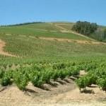 Винодельческая недвижимость в Испании